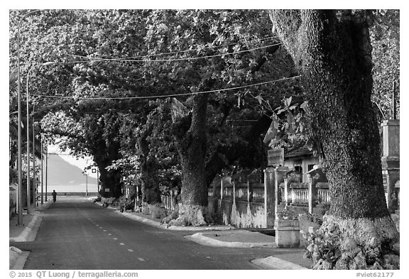 Street lined with old trees, Con Son. Con Dao Islands, Vietnam (black and white)