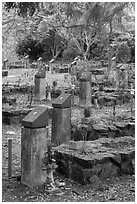 Unmarked graves, Hang Duong memorial cemetery. Con Dao Islands, Vietnam ( black and white)