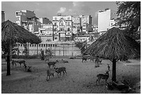 Saigon zoo and neighborhood across river. Ho Chi Minh City, Vietnam ( black and white)
