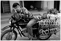 Man on a Russian-made Minsk loaded with live pigs. Northest Vietnam ( black and white)