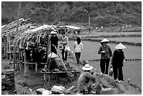 Market set on a dyke amongst rice fields near Ba Be Lake. Northeast Vietnam ( black and white)