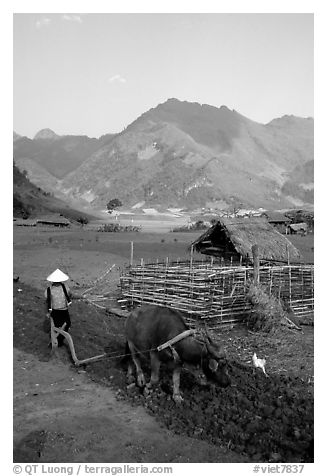 Woman plows a field  close to a hut, near Tuan Giao. Northwest Vietnam