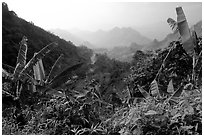 Banana leaves and mountains, between Lai Chau and Tam Duong. Northwest Vietnam (black and white)