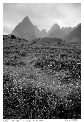 Wildflowers and peaks in the Tram Ton Pass area. Sapa, Vietnam (black and white)