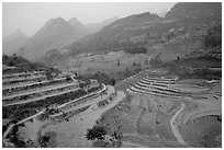Dry cultivated terraces. Bac Ha, Vietnam ( black and white)
