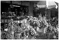 Flowers for sale outside the Ben Than Market. Ho Chi Minh City, Vietnam ( black and white)