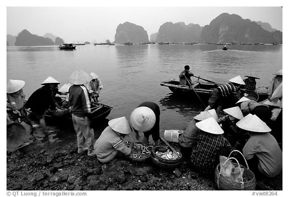 Black and white picture photo fresh catch halong bay vietnam
