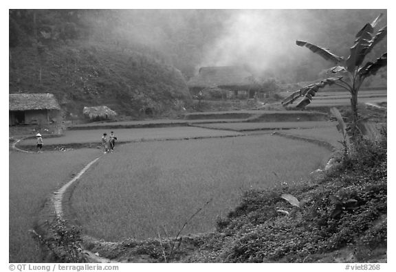 Rice cultures at a mountain village. Vietnam