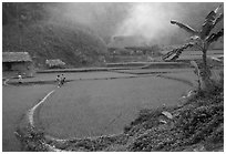 Rice cultures at a mountain village. Vietnam ( black and white)