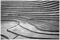 Terraced rice fields. Sapa, Vietnam ( black and white)