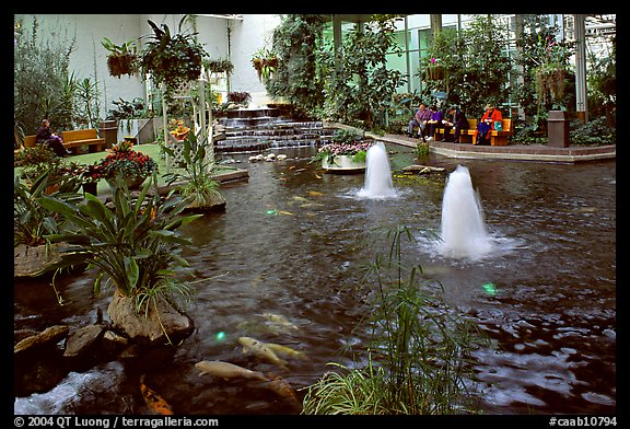 Indoor pond and garden. Calgary, Alberta, Canada (color)