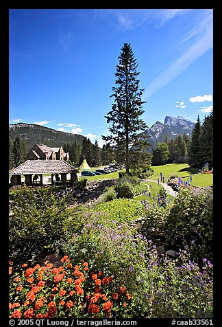 Flowers in Cascade Gardens. Banff National Park, Canadian Rockies, Alberta, Canada (color)