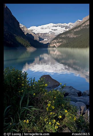 Yellow flowers, Victoria Peak, and Lake Louise, morning. Banff National Park, Canadian Rockies, Alberta, Canada (color)