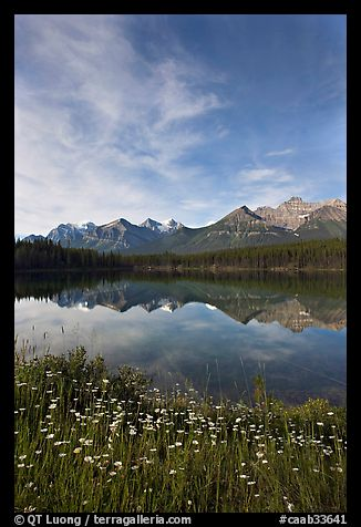 Wildflowers, Herbert Lake and  Bow range, morning. Banff National Park, Canadian Rockies, Alberta, Canada (color)