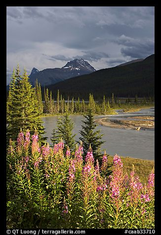 Fireweed, river, and approaching storm. Banff National Park, Canadian Rockies, Alberta, Canada (color)