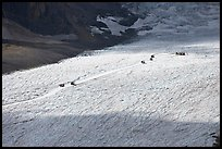 Distant view of snowcoaches transporting tourists on the Athabasca Glacier. Jasper National Park, Canadian Rockies, Alberta, Canada ( color)