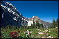Alpine meadow at the base of Mt Edith Cavell. Jasper National Park, Canadian Rockies, Alberta, Canada (color)