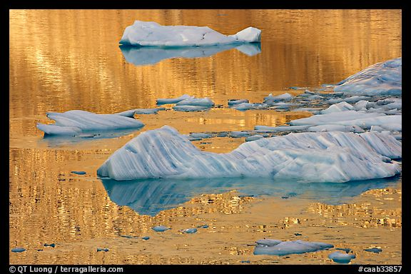 Icebergs and gold reflections, Cavel Pond. Jasper National Park, Canadian Rockies, Alberta, Canada (color)