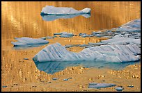 Icebergs and gold reflections, Cavel Pond. Jasper National Park, Canadian Rockies, Alberta, Canada