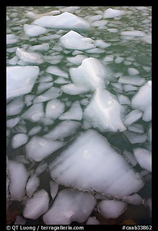 Tile of icebergs, Cavel Pond. Jasper National Park, Canadian Rockies, Alberta, Canada (color)