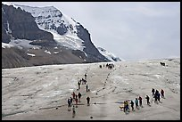 Groups of people amongst glacier and peaks. Jasper National Park, Canadian Rockies, Alberta, Canada