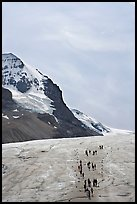 Athabasca Glacier with people in delimited area. Jasper National Park, Canadian Rockies, Alberta, Canada ( color)