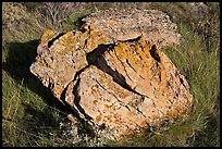 Rock with lichen lying in grass, Dinosaur Provincial Park. Alberta, Canada ( color)