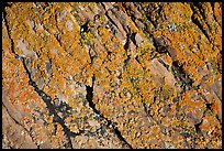 Detail of lichen on rock, Dinosaur Provincial Park. Alberta, Canada (color)
