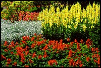 Patches of flowers. Butchart Gardens, Victoria, British Columbia, Canada ( color)