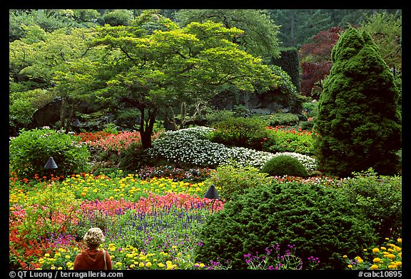 Tourist looking at flowers and trees in the Sunken Garden. Butchart Gardens, Victoria, British Columbia, Canada (color)