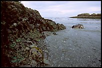 Cove and rock festoned with anemones south of Long Beach. Pacific Rim National Park, Vancouver Island, British Columbia, Canada ( color)