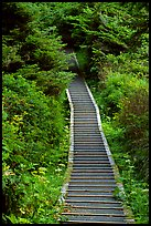 Boardwalk leading to South Beach. Pacific Rim National Park, Vancouver Island, British Columbia, Canada (color)