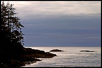 Trees and silvery light on Ocean, late afternoon. Pacific Rim National Park, Vancouver Island, British Columbia, Canada