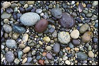Pebbles, South Beach. Pacific Rim National Park, Vancouver Island, British Columbia, Canada ( color)