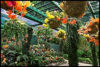 Bower overflowing with hanging baskets of begonias and fuchsias. Butchart Gardens, Victoria, British Columbia, Canada