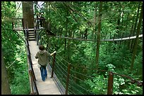 Treetop trail. Vancouver, British Columbia, Canada ( color)