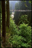 Capilano suspension bridge. Vancouver, British Columbia, Canada ( color)