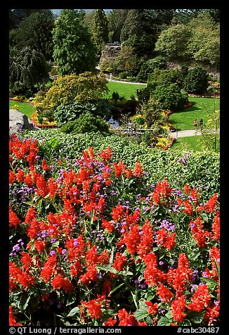 Flowers and sunken garden, Queen Elizabeth Park. Vancouver, British Columbia, Canada (color)