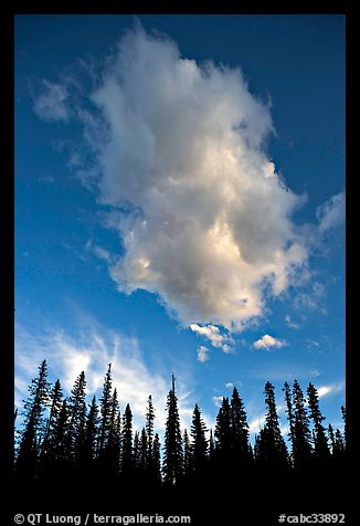 Trees and cloud, sunset. Yoho National Park, Canadian Rockies, British Columbia, Canada (color)