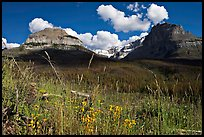 Wildflowers, peaks and Stanley Glacier, afternoon. Kootenay National Park, Canadian Rockies, British Columbia, Canada
