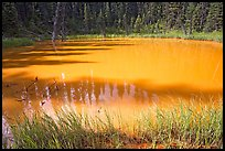 One of the ochre-colored Paint Pots, a warm mineral spring. Kootenay National Park, Canadian Rockies, British Columbia, Canada (color)