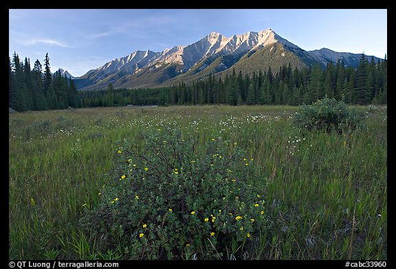 Meadow with wildflowers and Mitchell Range, sunset. Kootenay National Park, Canadian Rockies, British Columbia, Canada (color)