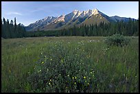 Meadow with wildflowers and Mitchell Range, sunset. Kootenay National Park, Canadian Rockies, British Columbia, Canada