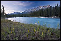 Mitchell range, Kootenay River, and flowers, sunset. Kootenay National Park, Canadian Rockies, British Columbia, Canada (color)