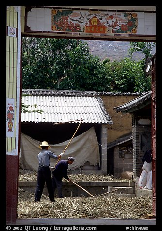 Men extract grains in a farm courtyard. Shaping, Yunnan, China (color)