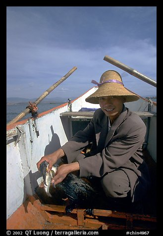 Cormorant fisherman recovers a fish from the throat of one of his birds. Dali, Yunnan, China