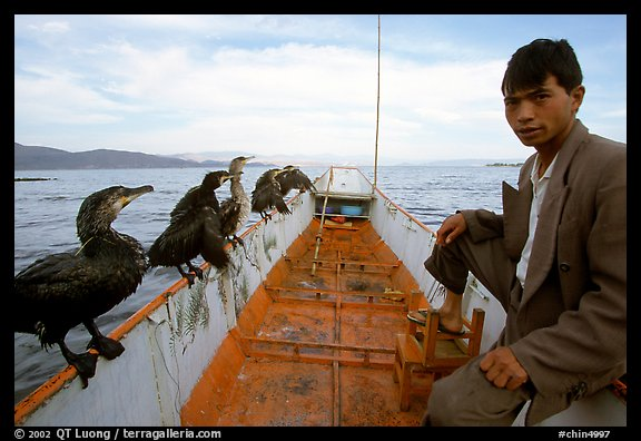 Fisherman and cormorant fishing birds. Dali, Yunnan, China (color)