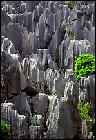 Grey limestone pillars of the Stone Forest. Shilin, Yunnan, China ( color)