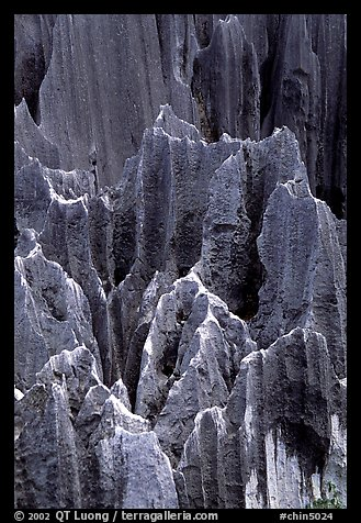 Details of grey limestone pinnacles of the Stone Forst. Shilin, Yunnan, China (color)