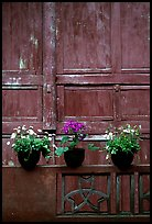 Potted flowers and wooden wall in Bailongdong temple. Emei Shan, Sichuan, China ( color)